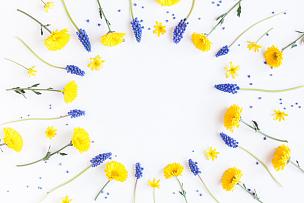 葡萄风信子,菊花,边框,白色背景,带球上篮,软帽,野花,爱沙尼亚,雏菊,野生植物