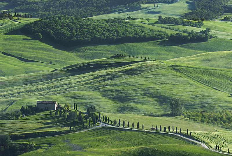 地形,托斯卡纳区,意大利,皮恩札,维得斯卡,柏树,农舍,美,水平画幅,无人