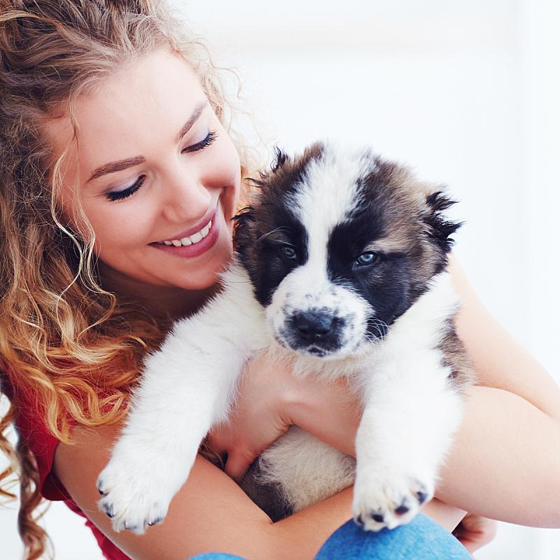 进行中,狗,可爱的,小狗,牧羊人,白色人种,美,休闲活动,水平画幅
