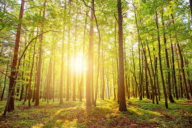森林,自然美,秘密,自然界的状态,罗马尼亚,环境,草,阴影,植物,夏天