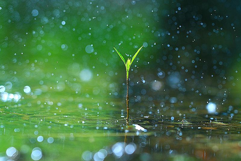 草,雨,清新,大特写,绿色,露水,环境,水,六月,水平画幅