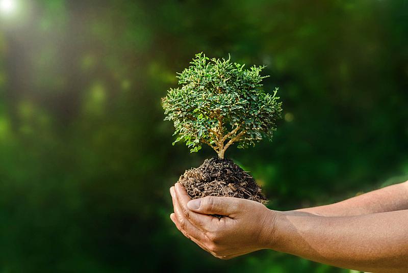 小的,手,拿着,植物,绿色背景,日光,自然,自己拥抱自己,盆景,环境保护