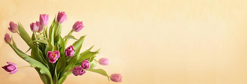 郁金香,花束,粉色,留白,水平画幅,研磨食品,植物,角落,叶子,自然