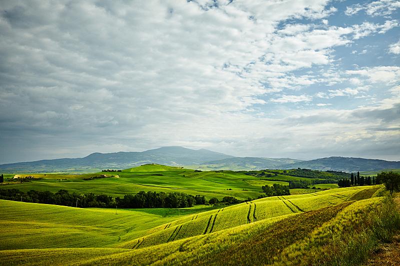 山,绿色,托斯卡纳区,柏树,农舍,美,水平画幅,无人,早晨,夏天