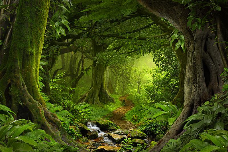 热带雨林,鸡尾酒,森林,远古的,雨林,枝繁叶茂,小路,地形,尼泊尔,禅宗