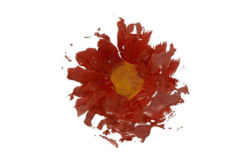 玛格丽特,失真的图像,图像聚焦技术,选择对焦,留白,水平画幅,无人,色彩鲜艳,特写,仅一朵花