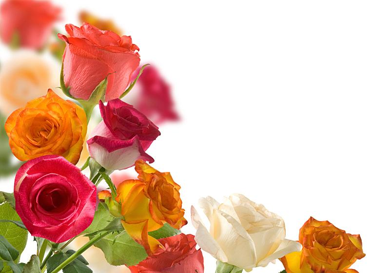 图像,分离着色,草坪,玫瑰,周年纪念,贺卡,清新,环境,春天,植物