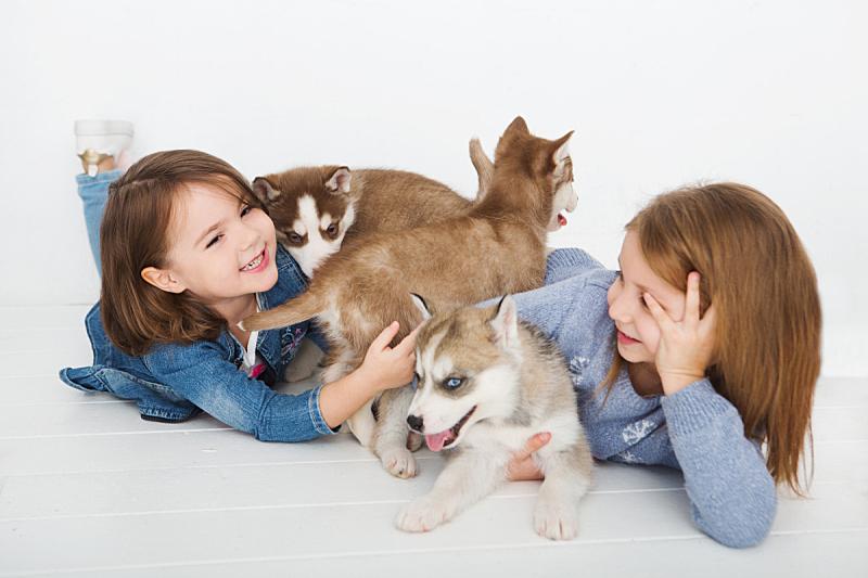 幸福,女孩,雪橇犬,毯子,小狗,寻回犬,水平画幅,白人,兄弟姐妹
