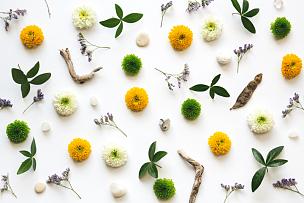 花纹,满画幅,菊花,花瓣,干的,叶子,绿色,正上方视角,白色背景,多色的