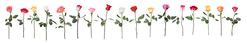 玫瑰,舞蹈,单茎玫瑰,垂直画幅,水平画幅,无人,夏天,仅一朵花,白色,大量物体
