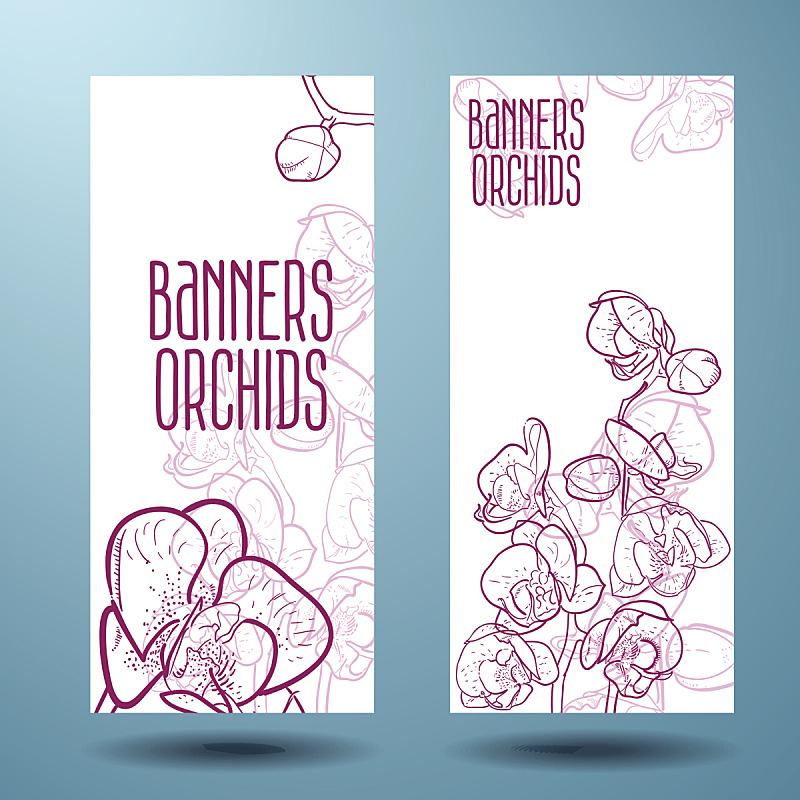 兰花,布告,式样,蝴蝶兰,美,留白,边框,艺术,绘画插图,标签