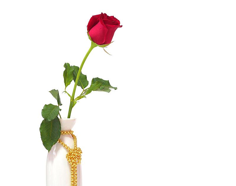 红色,花瓶,自然美,白色背景,白色,玫瑰,概念,美,水平画幅,形状