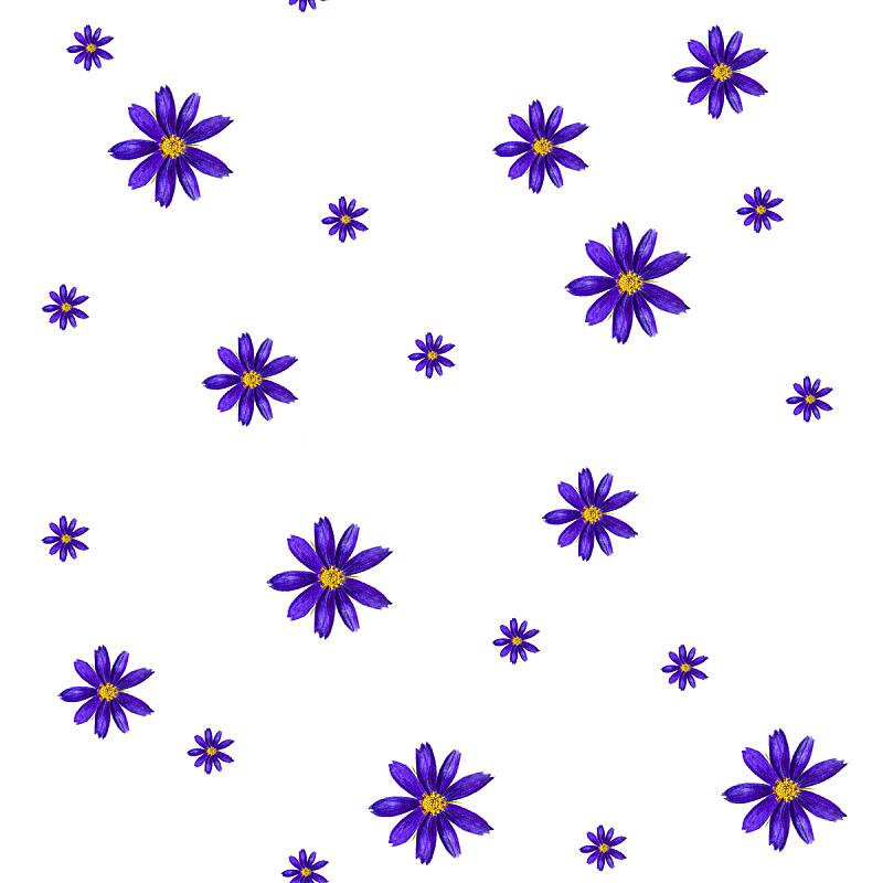 大波斯菊,式样,水彩画,绘画插图,边框,艺术,无人,夏天,计算机制图