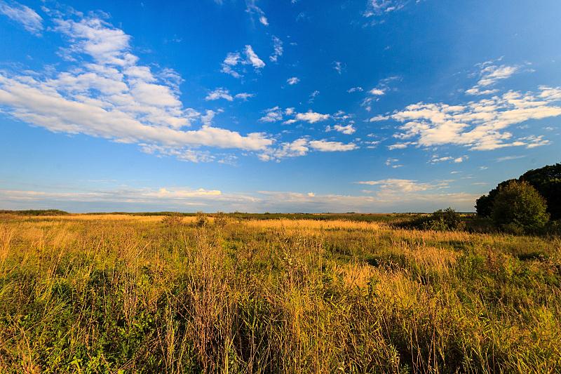草,草地,绿色,地形,秋天,苹果树,天空,美,水平画幅,无人