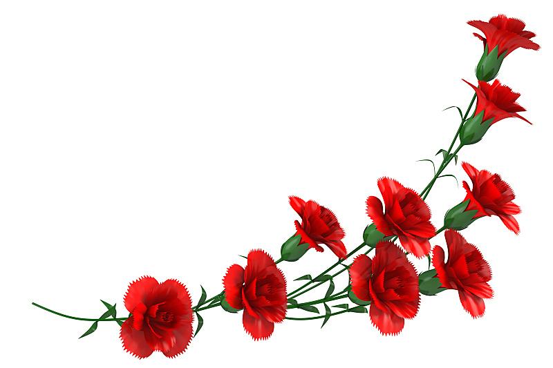 康乃馨,红色,水平画幅,计算机制图,计算机图形学,礼物,母亲节,花朵,花束,花
