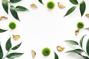 边框,叶子,绿色,白色背景,留白,水平画幅,无人,纯净,夏天,组物体