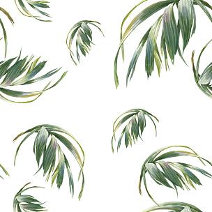 绘画插图,四方连续纹样,叶子,白色背景,水彩画,兰花,新的,艺术,无人,古典式