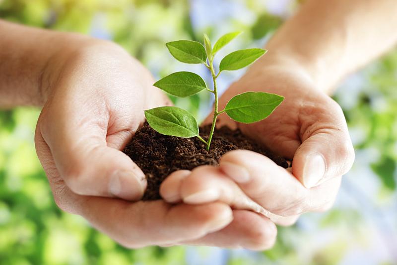 可持续生活方式,可持续资源,起源,树苗,土产,种子,新生活,农业,脆弱,栽培植物