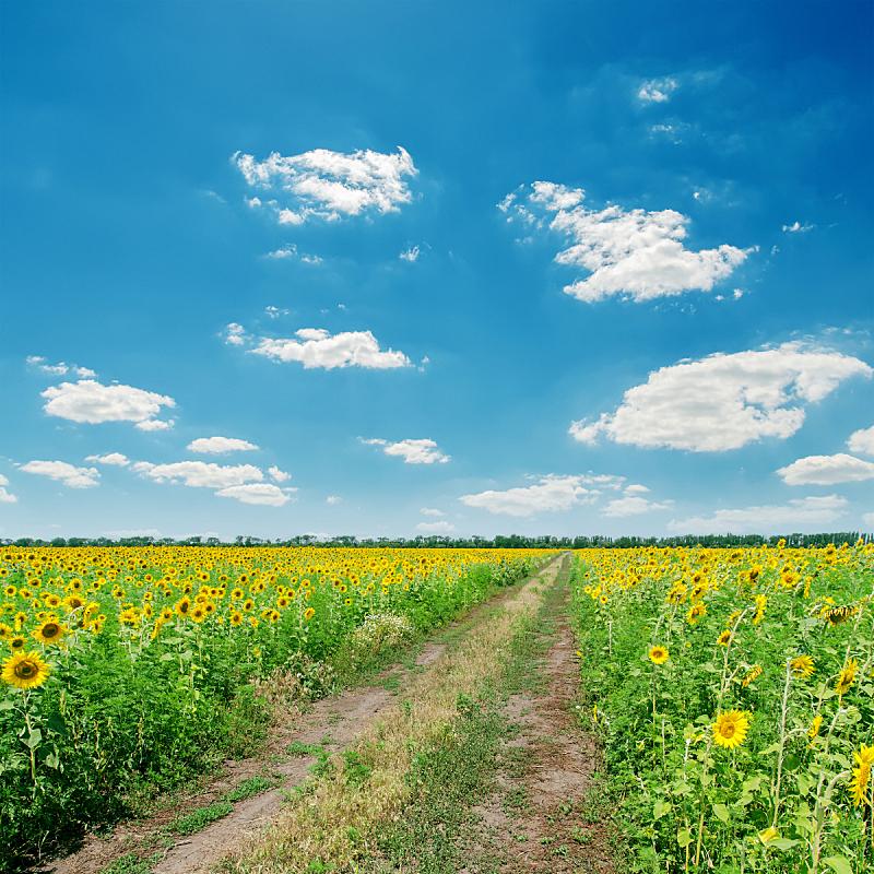蓝色,路,云,在下面,不卫生的,天空,无人,泥土,户外,方向