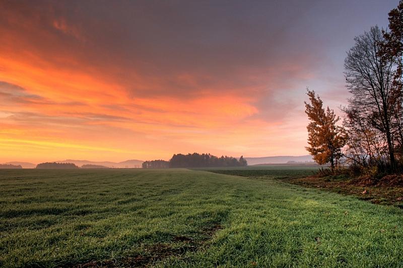 红松,耕地,天空,美,公园,水平画幅,无人,早晨,草坪,户外