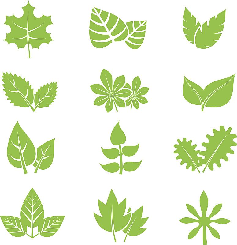 叶子,矢量,计算机图标,绿色,华丽的,部分,一个物体,背景分离,简单,布置
