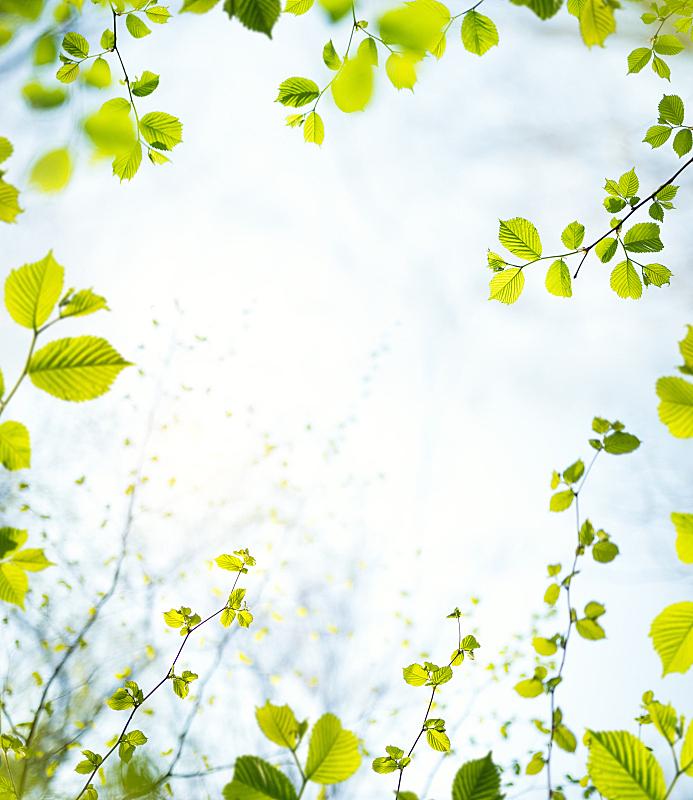 边框,春天,垂直画幅,天空,留白,枝繁叶茂,无人,山毛榉树,夏天,户外