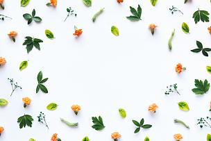 白色背景,边框,花头,成组图片,叶子,花朵,花纹,静物,在上面,枝