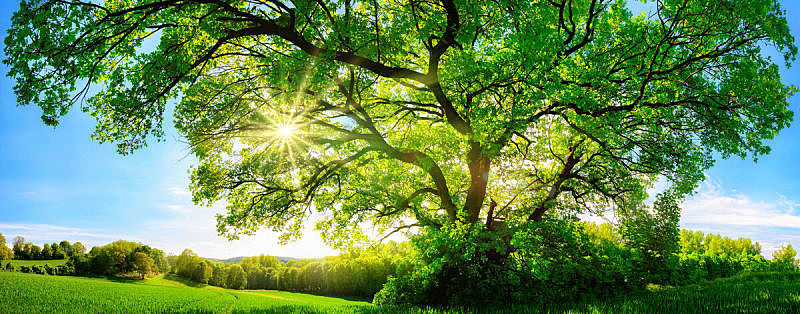 阳光光束,宏伟,橡树,天空,美,公园,水平画幅,枝繁叶茂,能源,无人