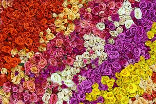 玫瑰,自然美,多色的,墙,情人节,夏天,花束,白色,风景,窗帘