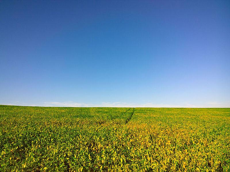 田地,天空,水平画幅,素食,无人,整体情况,泥土,透视图,户外,大豆