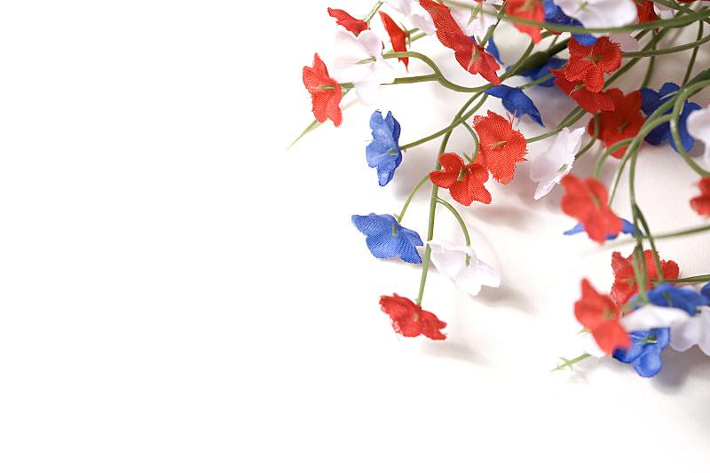 红色,白色,蓝盆花,美国,边框,水平画幅,美国国庆日,无人,蓝色,白色背景