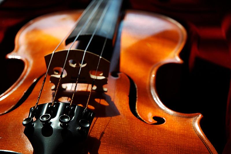 小提琴,奶油糖,法郎符号,大提琴,英文字母f,琴码,指板,噪声