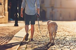 狗,早晨,遛狗师,宠物牵引带,圆石,狗链,城市,人,街道,一个人