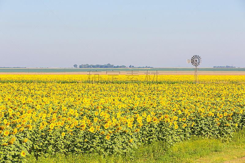 风车,向日葵,水,天空,美,水平画幅,无人,户外,田地,彩色图片