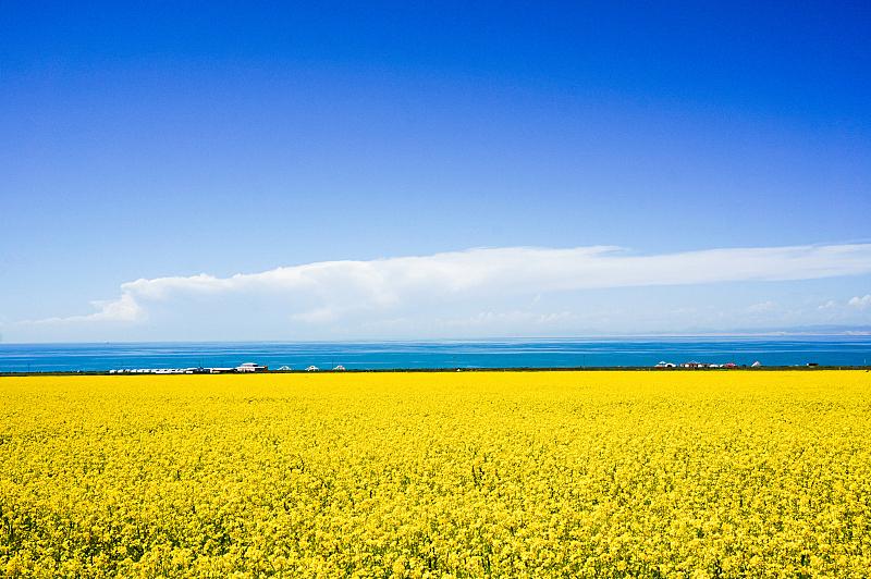 青海湖,风景,俄亥俄河,青海省,油菜花,水,天空,留白,水平画幅,无人
