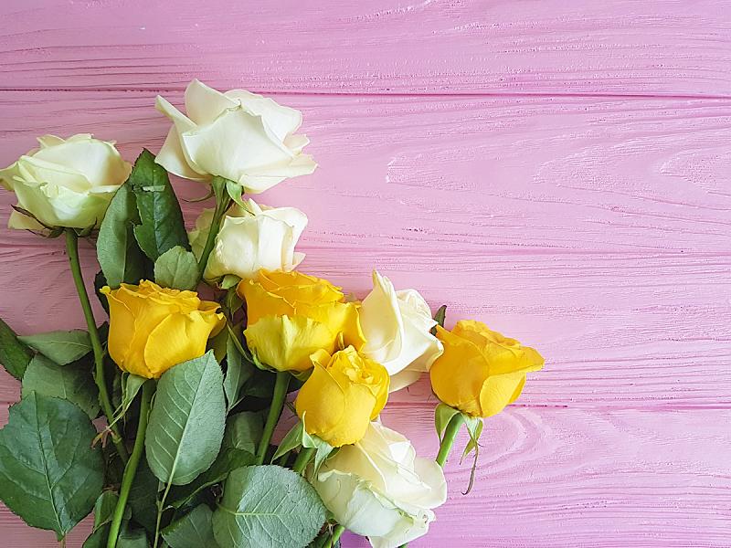 玫瑰,黄色,木制,粉色,美,留白,边框,水平画幅,情人节,夏天