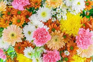 自然美,美,水平画幅,特写,花束,植物,清新,鲜花盛开,情人节,周年纪念