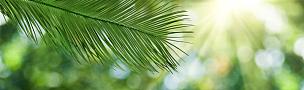 植物,图像,绿色背景,运动模糊,清新,热带气候,环境,天气,春天,背景