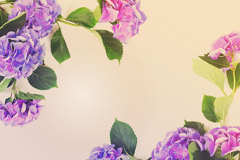 紫罗兰,蓝色,美,水平画幅,无人,夏天,明亮,白色,植物,植物学