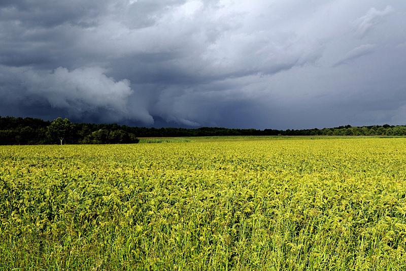稷,田地,春天,农业,蔬菜,法国,图像,谷类,无人,户外
