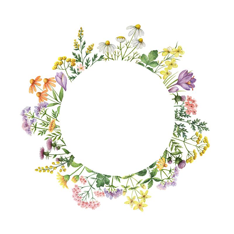 圆形,水彩画,健康保健,边框,植物群,顺势医学,野金盏花,甘菊花,藏红花,甘菊