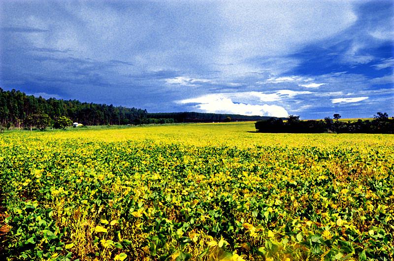 自然,黄色,戈亚斯,天空,水平画幅,地形,景观设计,无人,巴西,摄影