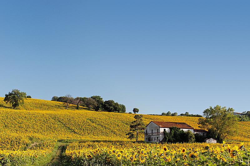 农舍,天空,水平画幅,无人,古老的,夏天,户外,明亮,被抛弃的,田地