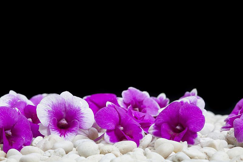 石头,美,兰花,褐色,水平画幅,户外,特写,泰国,明亮,拖鞋