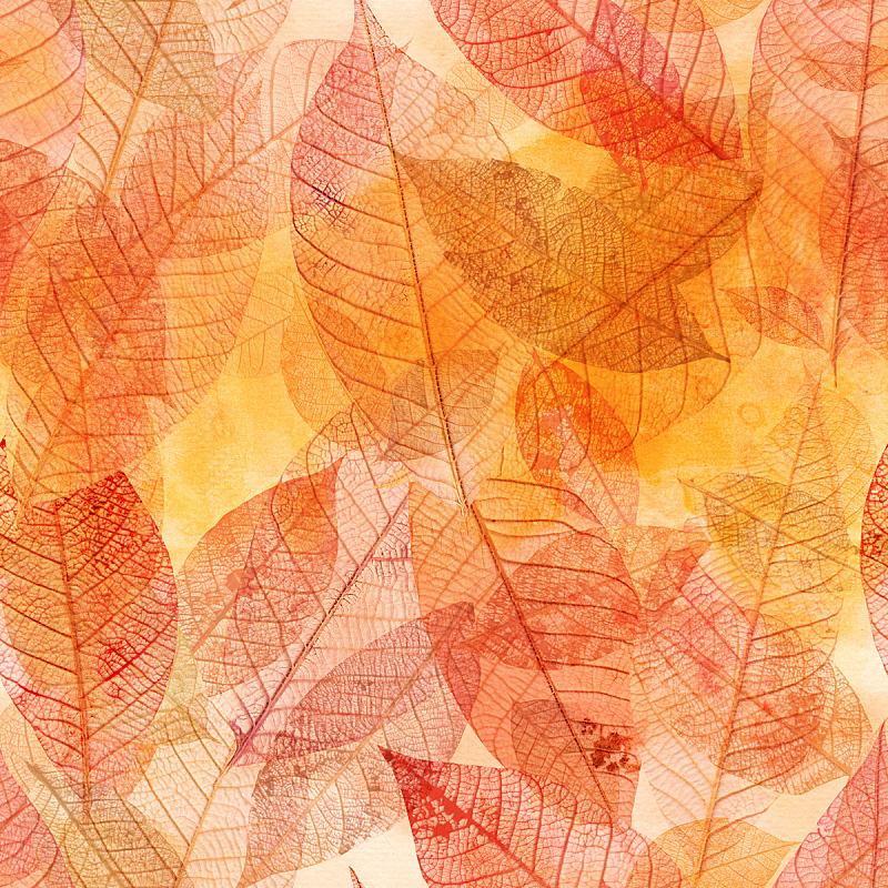 叶子,背景,金色,式样,骨架,脆弱,纯洁,抽象背景,阶调图片,黄色背景