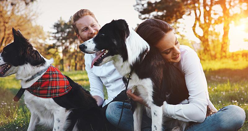 狗,自然,浪漫,异性恋,一见钟情,美,水平画幅,进行中,夏天,户外