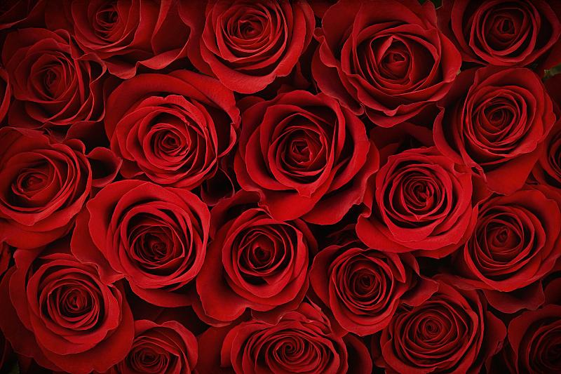 玫瑰,情人节,红色,背景,浪漫,水平画幅,彩色图片,无人,爱,花