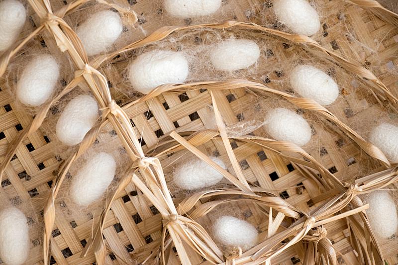 茧,白色,蚕,动物群,动物的巢,机织织物,关闭的,背景,正下方视角,留白