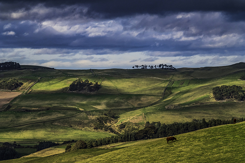 切维厄特丘陵,九月,农业,凯尔索,欧洲蕨,环境,黄昏,天气,英国,草