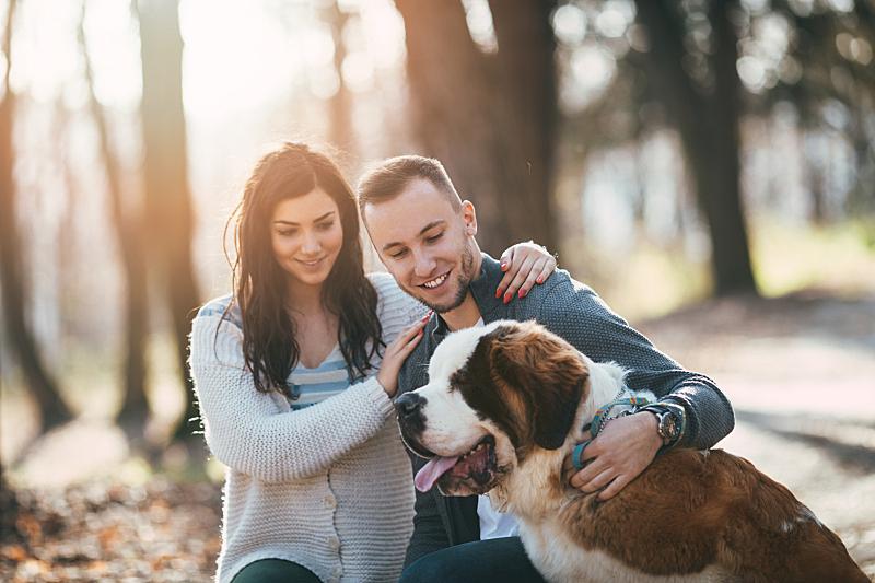狗,公园,异性恋,圣伯纳犬,死亡的植物,秋季系列,纯种犬,浪漫,动物,拿着